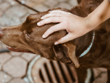San Antonio's Most Dog-Friendly Neighborhoods