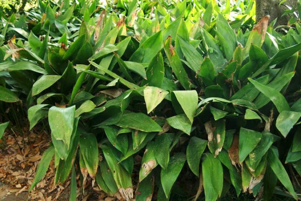 8 Plants That Will Thrive In A San Antonio Garden